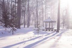 冬天寒冷森林 免版税图库摄影