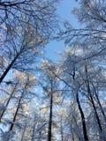 冬天对天空的雪树 免版税库存图片
