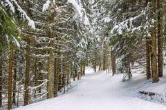冬天小径 图库摄影