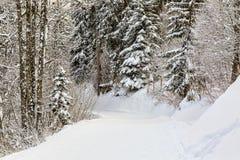 冬天小径 免版税库存照片