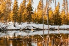 冬天小河反射2 库存图片