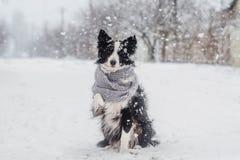 冬天小狗一条博德牧羊犬狗的童话画象在雪的 库存照片