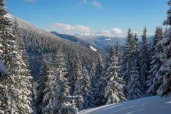 冬天山全景,报道用杉木森林 免版税图库摄影