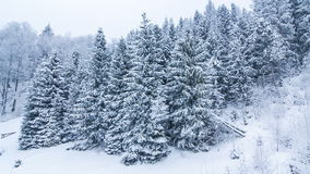 冬天山环境美化与高云杉和雪 股票视频