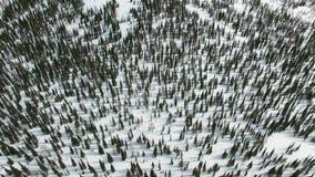 冬天山的全景与森林西伯利亚的 股票录像