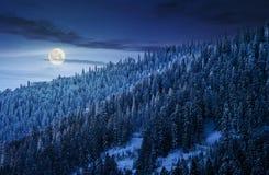 冬天山的壮观的森林在晚上 免版税库存照片