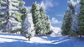 冬天山的杉木森林 库存图片