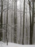 冬天山的雾森林 库存图片