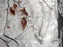 冬天山的雾森林 库存照片