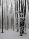 冬天山的雾森林 免版税图库摄影
