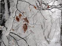 冬天山的雾森林 免版税库存照片