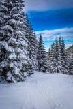 冬天山道路在森林 库存照片