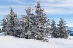 冬天山风景;雪盖的云杉 库存图片