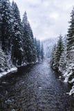冬天山, Apuseni白羊星座河  库存图片