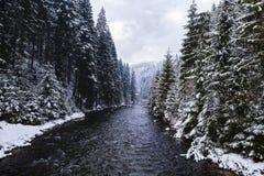 冬天山, Apuseni白羊星座河  免版税图库摄影
