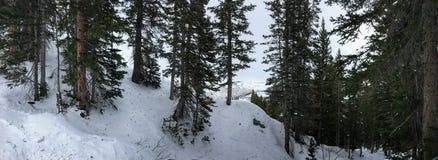 冬天峡谷滑雪在树的射击视图在Wasatch附近朝向落矶山,布赖顿滑雪胜地,接近盐湖和Heber Val 免版税库存图片