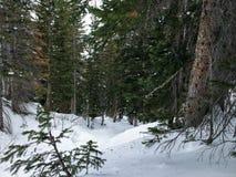 冬天峡谷滑雪在树的射击视图在Wasatch附近朝向落矶山,布赖顿滑雪胜地,接近盐湖和Heber Val 免版税库存照片