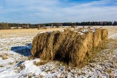 冬天干草领域在12月 免版税库存图片