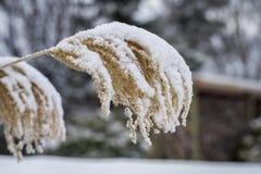 冬天干草 免版税库存照片