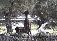 驴冬天平安的牧场地 库存图片