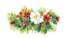 冬天开花,杉树,圣诞节槲寄生 水彩 免版税库存照片