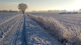 冬天德国 库存照片