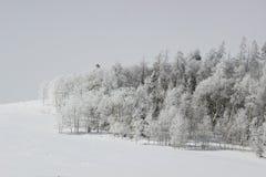 冬天怀俄明 免版税库存照片