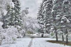 冬天或晚秋天风景在第一降雪以后 库存图片