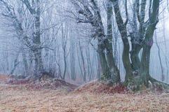冬天或秋天季节的不可思议的美丽的有薄雾的森林 免版税库存图片