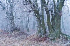 冬天或秋天季节的不可思议的美丽的有薄雾的森林 免版税库存照片