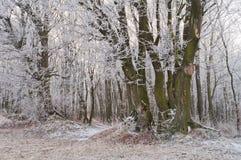 冬天或秋天季节的不可思议的美丽的有薄雾的森林 免版税图库摄影