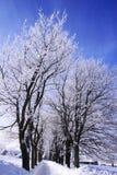 冬天方式 免版税库存图片