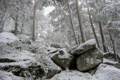 冬天旅行,多雪的杉木美好的风景与雾,口岸的 免版税库存图片