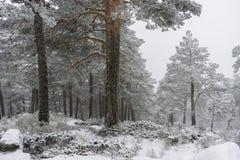 冬天旅行,多雪的杉木美好的风景与雾,口岸的 图库摄影