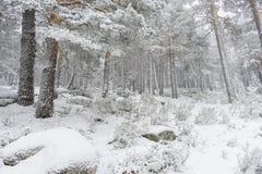 冬天旅行,多雪的杉木美好的风景与雾,口岸的 免版税库存照片