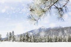 冬天旗竿亚利桑那山斯诺伊场面 免版税库存照片