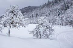 冬天无人居住的积雪的森林A步行在储备Kyiv地区,乌克兰 图库摄影