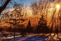 冬天日出在有雾和雪的一个森林里 库存图片