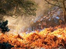 冬天日出在森林里 免版税库存照片