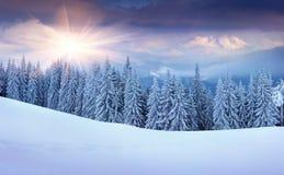 冬天日出的全景在山的 免版税库存照片