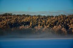 冬天日出的森林 库存照片