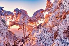 冬天日出风景在黄山国家公园 免版税库存图片