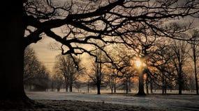 冬天日出, Rousham,牛津郡 免版税库存照片
