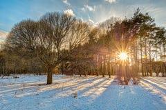 冬天日落在城市公园 库存照片