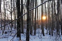 冬天日落在森林里 库存照片