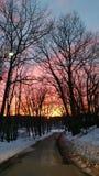 冬天日落通过光秃的橡树 免版税库存图片