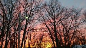 冬天日落通过树 免版税库存图片