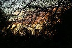 冬天日落通过海滩树 免版税库存图片