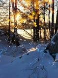 冬天日落降雪闪烁湖岸 免版税库存照片