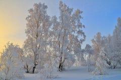 冬天日落风景 免版税图库摄影